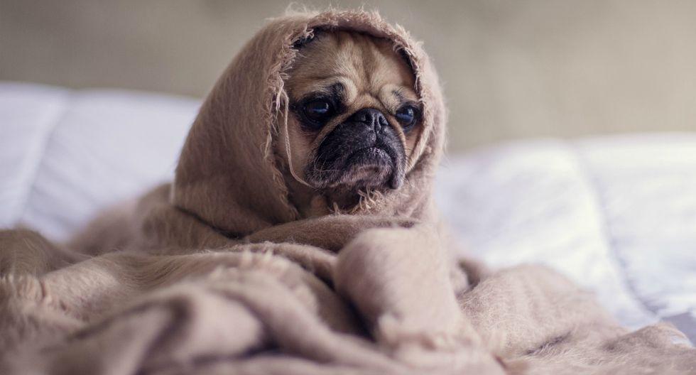 ¿Es recomendable ponerle ropa a tu perro cuando hace frío?